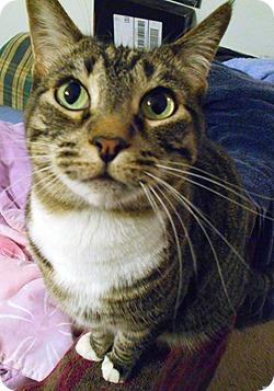 Meet Isabella. She says hi.
